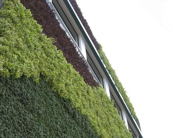 Little Owl Living Wall
